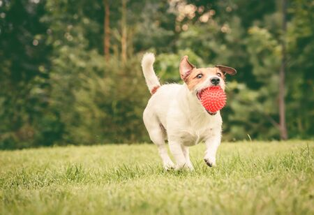 Happy dog caught ball Stok Fotoğraf