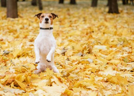 Dog sitting in fall park Stok Fotoğraf