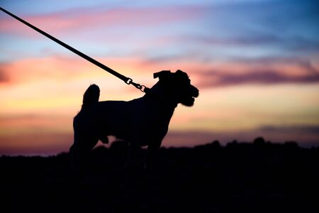 Time to walk with pet concept with silhouette of dog Stok Fotoğraf