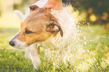 Dog washing under garden hose