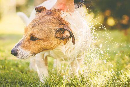 Lavaggio del cane sotto il tubo da giardino