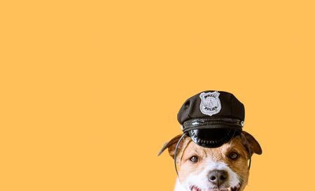 Funny dog wearing police officer peaked cap