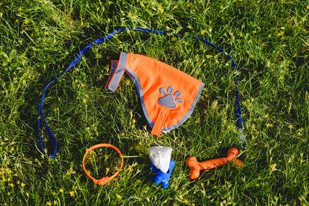 Dog walker accessories laying on green grass
