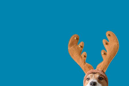 Dog wearing headband with Christmas reindeer antlers