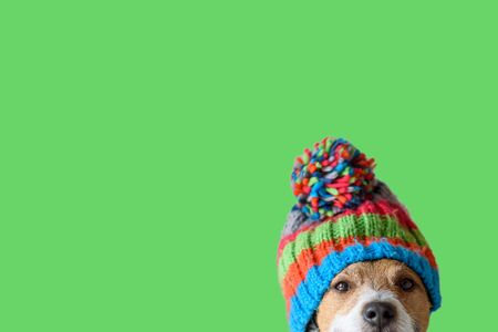 Dog wearing warm knitted hat