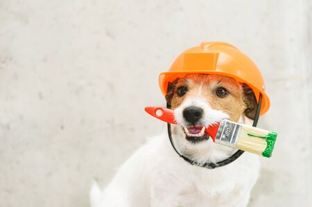 Dog as funny house painter with paintbrush
