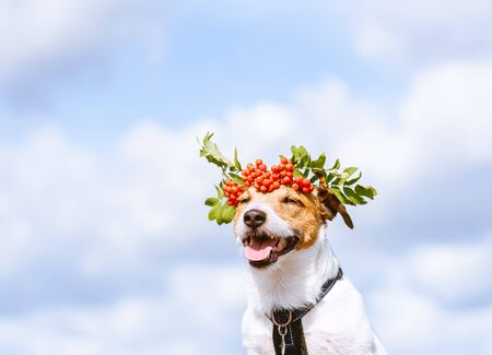 Autumn portrait of dog with rowan crown against sky