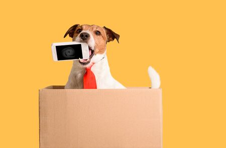 Works out of the box concept with dog holding smartphone in mouth sitting in box