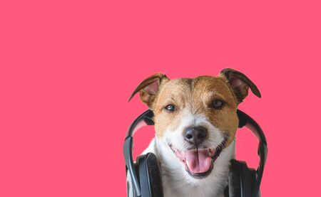 Cool dog with headphones listening and enjoying music