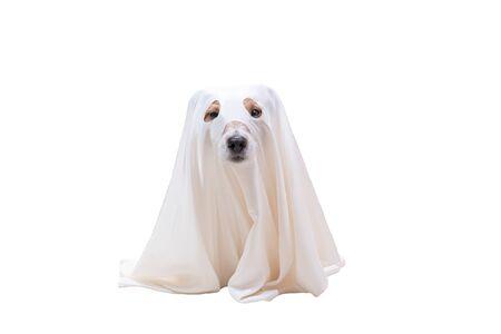 Süßer Hund unter weißer Decke als Kostüm des Halloween-Geisters