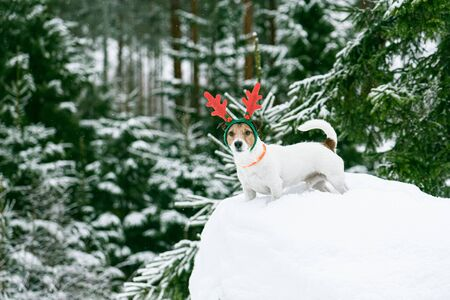 Christmas scene in wild Lapland forest with dog wearing holiday costume of reindeer Stock Photo