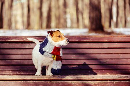 Al caldo e soleggiato giorno d'inverno cane che indossa una sciarpa lavorata a maglia sul banco in park