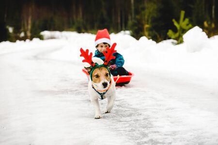 Cute dog wearing costume of Christmas reindeer and Santa Clause in red sleigh Standard-Bild