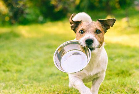Hongerige of dorstige hond haalt metalen kom om voer of water te krijgen