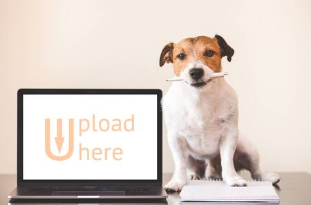 User-generated content (UGC) concept with dog doing creative work on notebook Standard-Bild