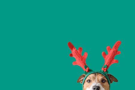 New year and Christmas concept with Dog wearing reindeer antlers headband against solid green background Stok Fotoğraf