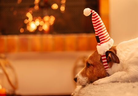 Dog in festive elf hat waiting for Christmas eve celebration start near fireplace with blazing fire