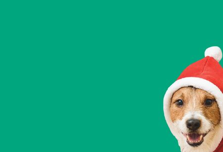 Happy New Year concept with dog in Santa Claus costume peeking over corner