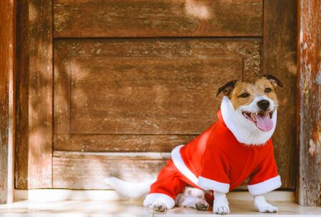 Welcome to Christmas party concept with happy dog wearing Santa Claus costume waiting in front of door