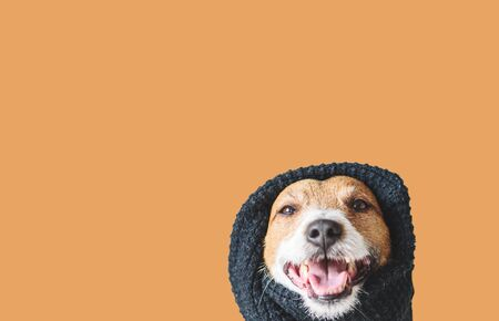 Care about your pet during winter season concept with dog in warm black scarf Фото со стока
