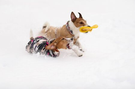 Two funny dogs dressed in warm coats playing in snow Фото со стока