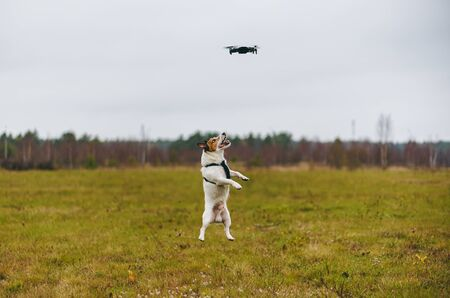 Aggressive dog jumping trying to catch flying quadrocopter drone