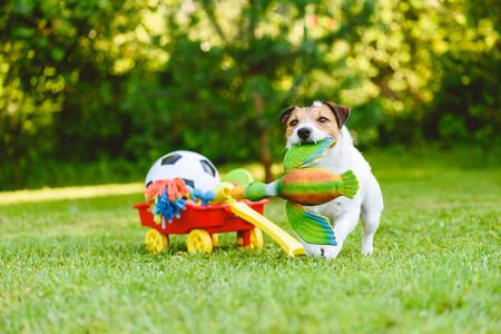 Dog fetches toy duck bird from cart full of pet toys and sport balls