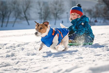 Dog pulling sledge with kid boy on high pace on sunny winter day