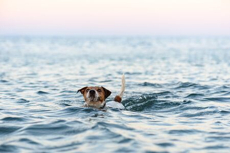 Funny dog playing in sea swimming and diving into water Banco de Imagens