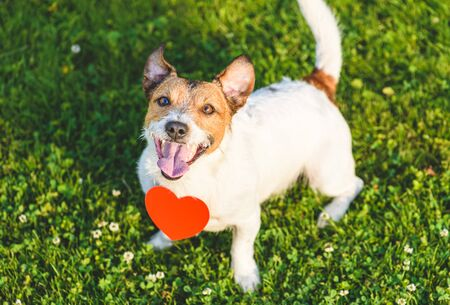 Lovely dog looking up with red heart-shaped pendant as pet love concept