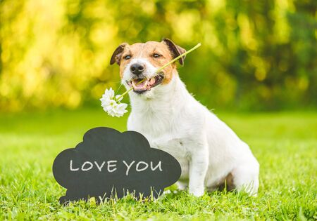 Love and care concept with dog holding white flower in mouth and blackboard with handwritten inscription Love you