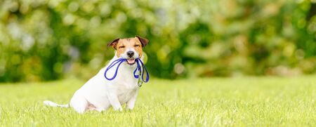 Concept of dog walking and pet sitting with dog holding leash in mouth