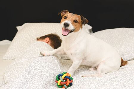 Playful happy dog in bed waking up owner to go for walk and play with toy ball