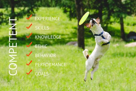 Humorous business concept about competence with dog catching flying disk in agile jump 写真素材 - 141735137