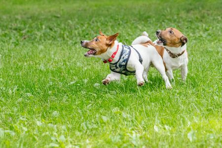 Two dogs playing with energy and socializing in daycare for pets Stock Photo