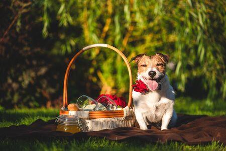 Dog at family picnic at backyard lawn on sunny summer day