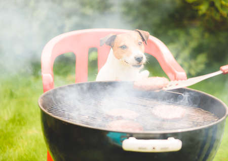 Funny dog looking at burger cooked on grill during family party at backyard lawn on summer day