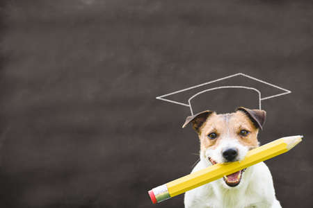 Funny concept of newcomer pupil dreaming about graduation from school with dog holding pencil against blackboard with graduation cap drawn on it