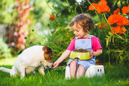 Little girl taking care of her pet feeds dog from bowl with dry food