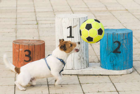 Dog playing football in front of pedestal (focus on podium)