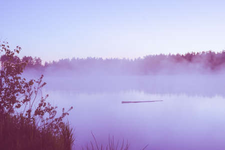 Log floating on river water in morning fog