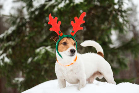 Christmas concept with dog as funny but proud Santa Claus reindeer in deep snow on December day Stock Photo