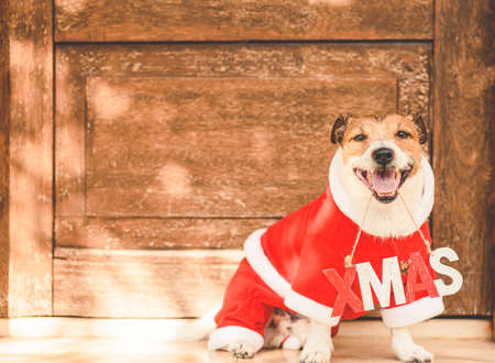 Funny dog wearing costume of Santa Claus with Xmas sign in southern country on sunny winter day 免版税图像