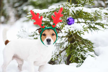 Funny dog wearing reindeer antlers costume next to Christmas tree decorated with purple glass bauble
