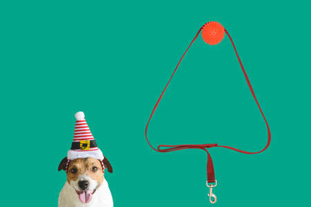 Concept of funny little elf under New Year tree with dog and artificial tree made from dog leash 免版税图像