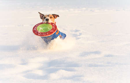 Dog enjoying playing with flying disk in deep snow as family has fun on wonderful winter day