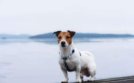 Winter blues concept - on moody and foggy winter day sad dog sitting on pier with beautiful lake in background