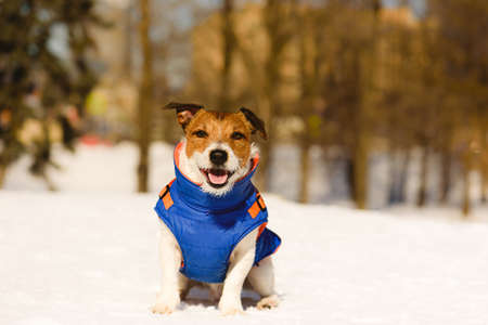 Happy dog in warm jacket sitting on snow on beautiful sunny winter day