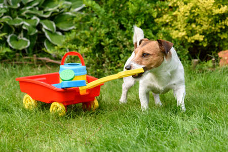 Dog pulling cart with toy garden tools as humorous concept of hobby gardening