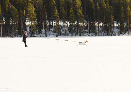 Little boy training for skijoring with dog on ice of lake on sunny winter day 免版税图像